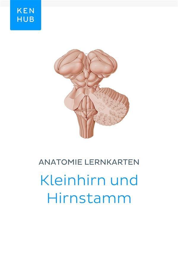 Ungewöhnlich Kleinhirnwurms Anatomie Zeitgenössisch - Anatomie Von ...