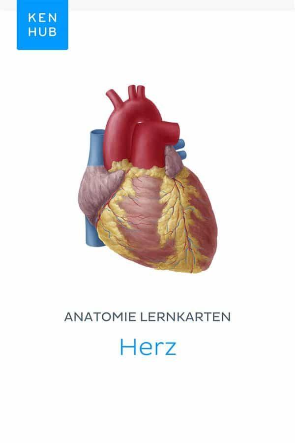 Atemberaubend Pferdebein Anatomie Fotos - Menschliche Anatomie ...