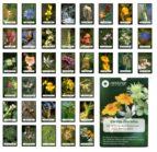 cartas florales: las 38 flores descubiertas por el dr. edward bach (estuche: cartas + libro) edward bach 9788493220532