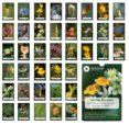 cartas florales: las 38 flores descubiertas por el dr. edward bach (estuche: cartas + libro)-edward bach-9788493220532